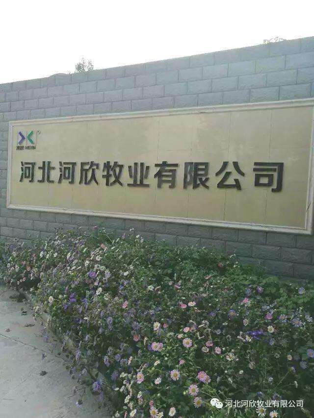 河欣牧业厂区.jpg